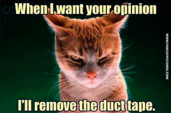 funny-cat-pictures-your-opinion