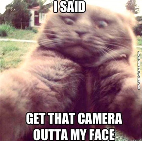 funny-cat-pictures-camera-shy