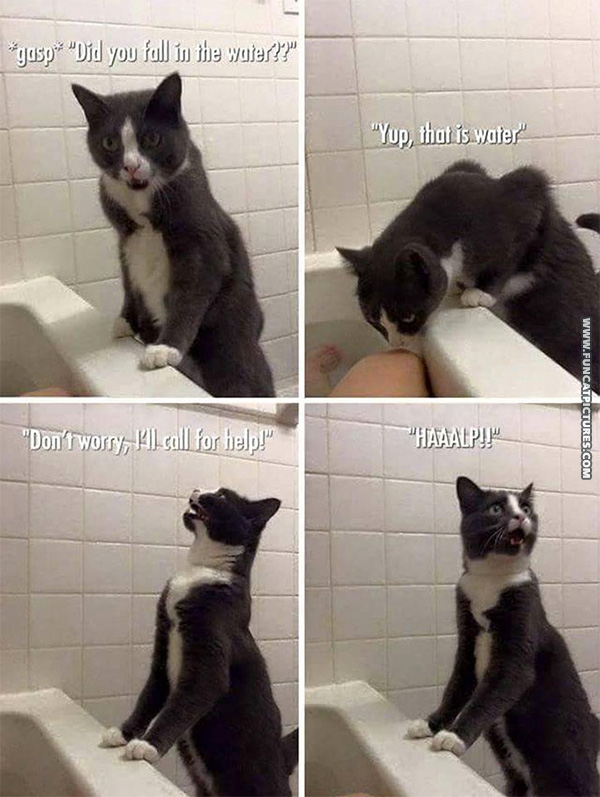 funny-cat-pictures-helping-cat