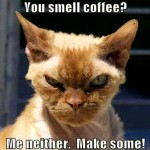 If cats drank Coffee…