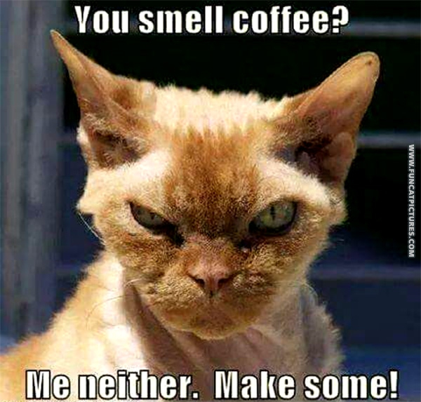 funny-cat-pictures-in-need-of-coffee