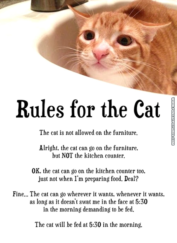 funny-cat-pictures-rules-for-the-cat