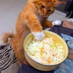 Cats on diet be like…