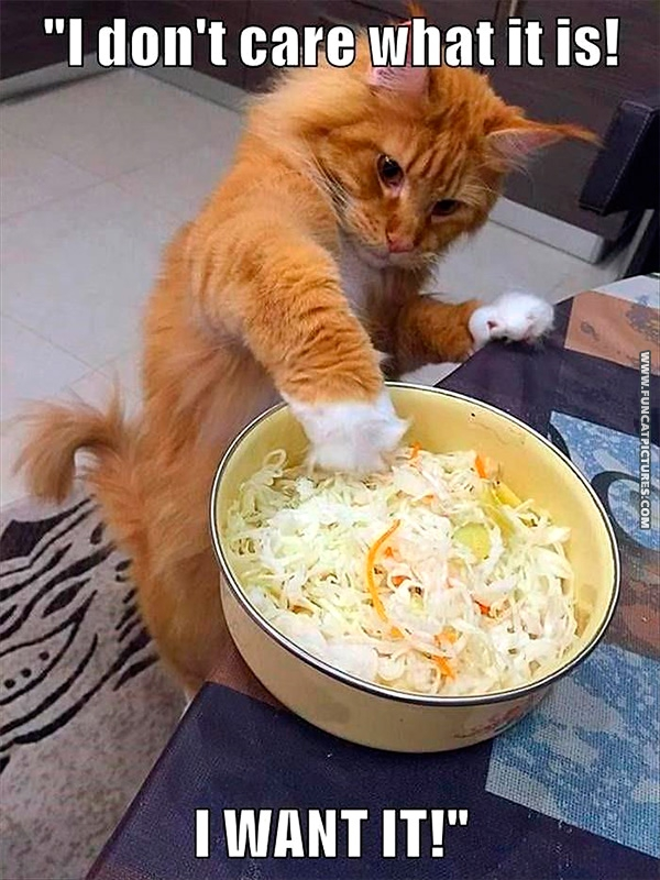 funny-cat-pictures-salad-lover