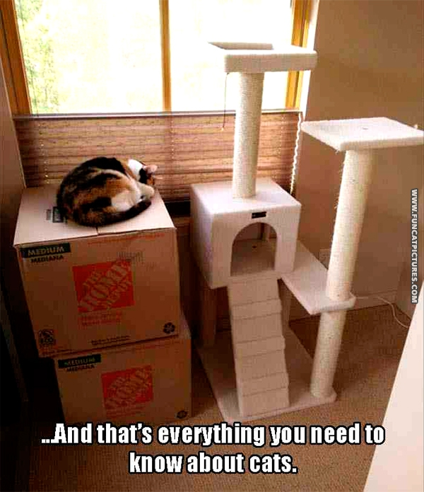 funny-cat-pictures-all-you-need-to-know-about-cats