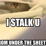Cat stalker in bed
