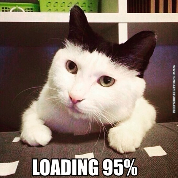 funny-cat-pictures-loading