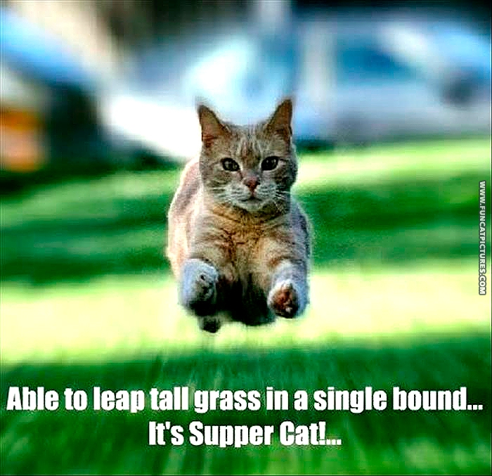 funny-cat-pictures-supper-cat