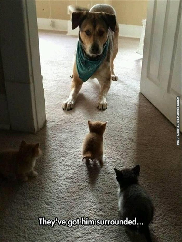 funny-cat-pictures-surrounded-dog