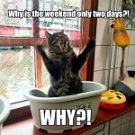 Even cats loves weekends