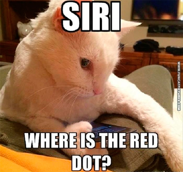 funny-cat-pictures-where-is-the-red-dot