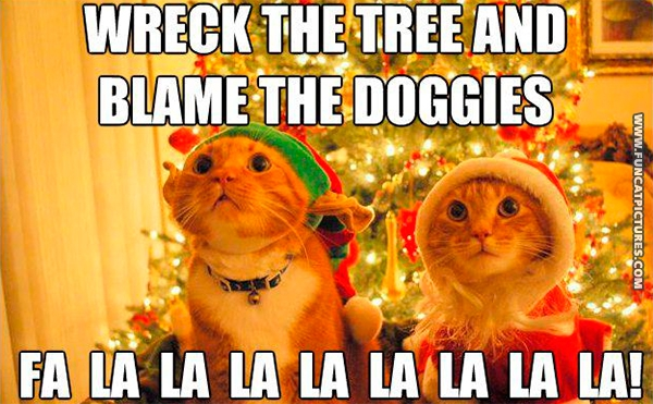 funny-cat-pictures-christmas-song