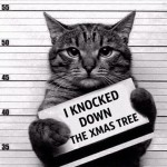 Guilty christmas cat