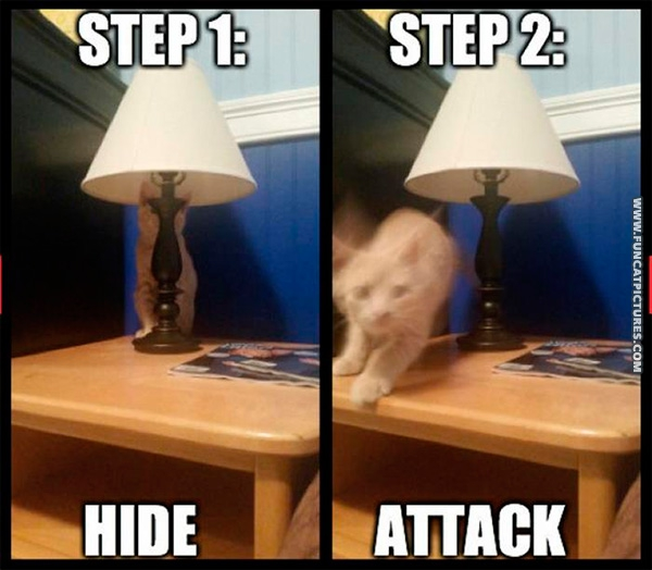 funny-cat-pictures-hunting