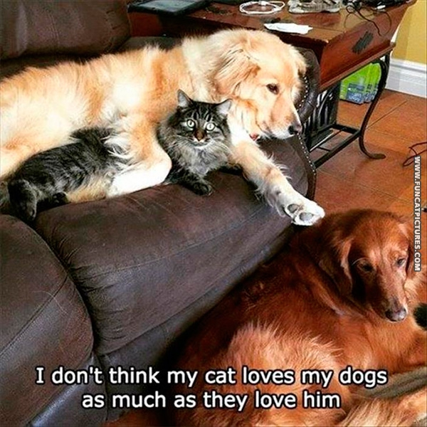 funny-cat-pictures-not-a-dog-lover
