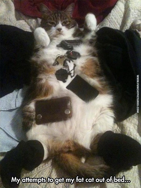 fun-cat-pictures-getting-the-cat-out-of-bed