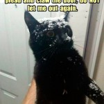 Some cats just hate the snow