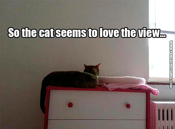 funny-cat-pictures-loving-the-view