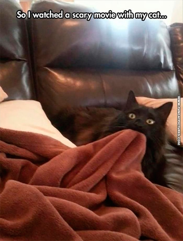 funny-cat-pictures-scary-movie-with-cat