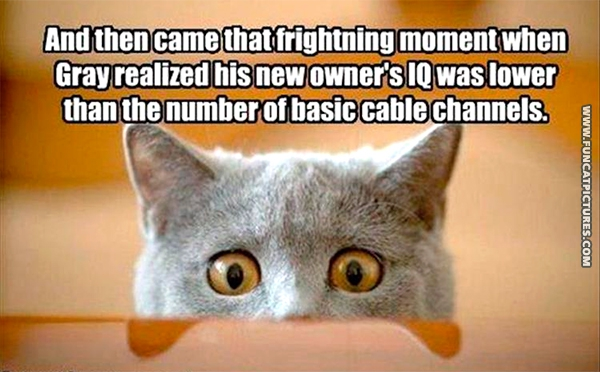 funny-cat-pictures-that-moment-with-low-iq