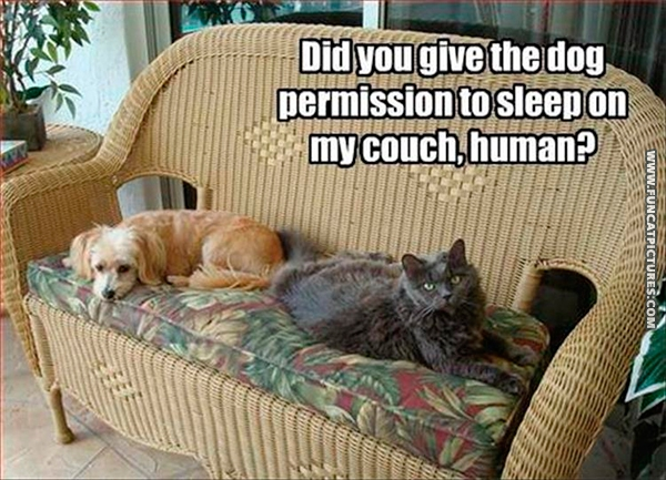 funny-cat-pictuers-cat-and-dog-on-couch