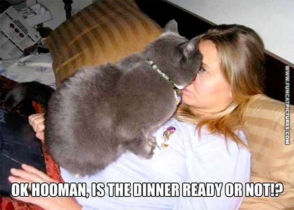 funny-cat-pictures-dinner-time