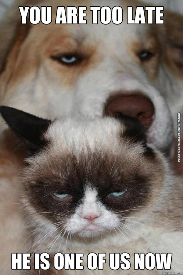 funny-cat-pictures-grumpy-got-a-dog