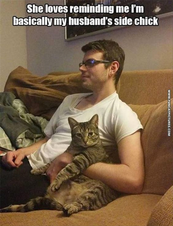 funny-cat-pictures-husbands-side-kick