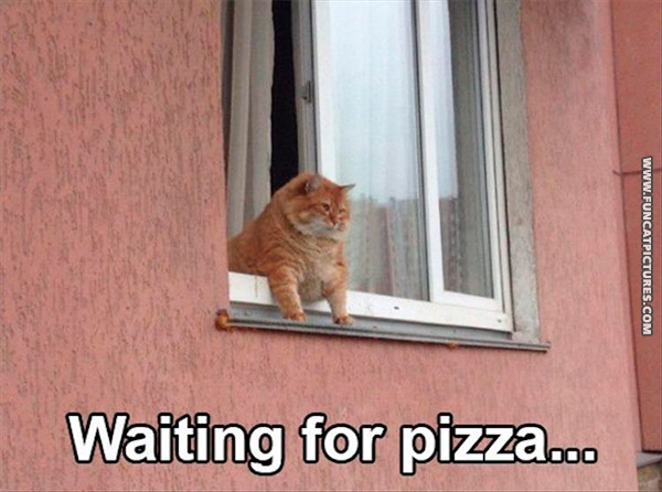 funny-cat-pictrures-waiting-for-pizza