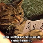 Why cats don't play cards
