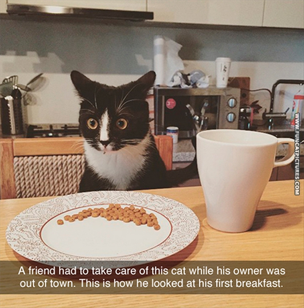 funny-cat-pictures-first-breakfast
