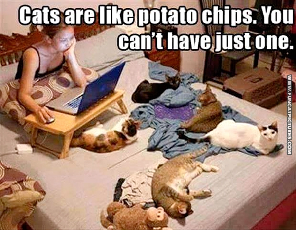funny-cat-pictures-cats-are-like-chips
