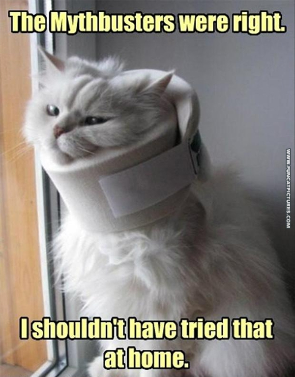 funny-cat-pictures-mythbusters-was-right