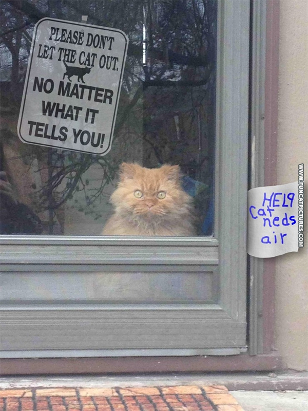funny-cat-pictures-cat-needs-air
