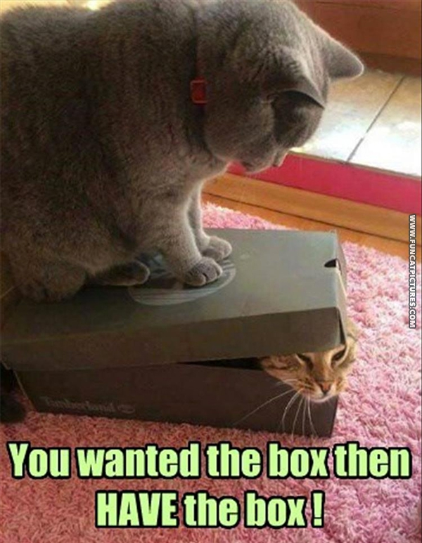 Two cats in a friendly fight over a box