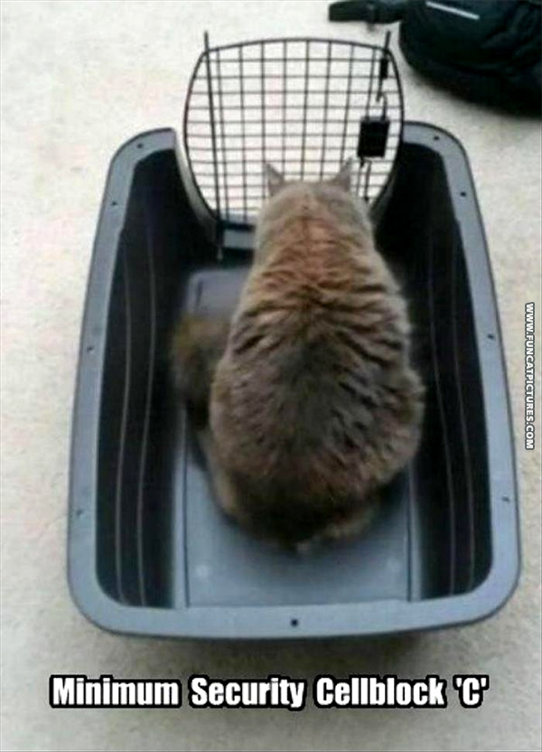 funny-cat-pictures-minimum-security