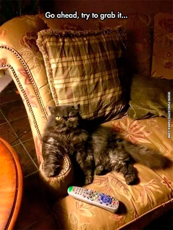 funny-cat-pictures-try-to-grab-the-remote