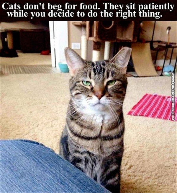 funny-cat-pictures-cats-dont-beg