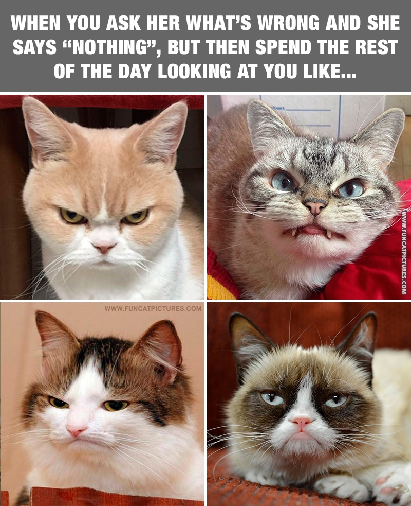 When your partner (or cat) gives you this look…