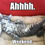 This cat knows how to tackle the weekend