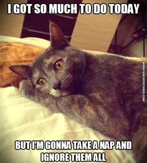 funny-cat-pictures-much-to-do-today