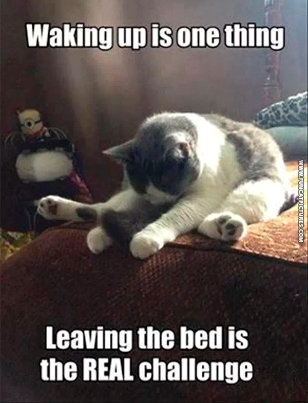 funny-cat-pictures-waking-up-is-one-thing