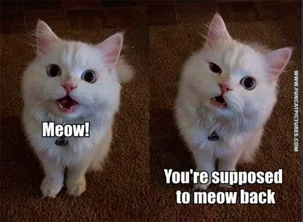 funny-cat-pictures-youre-supposed-to-meow-back