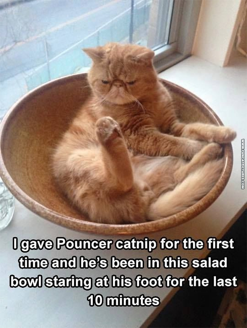 funny-cat-pictures-first-catnip